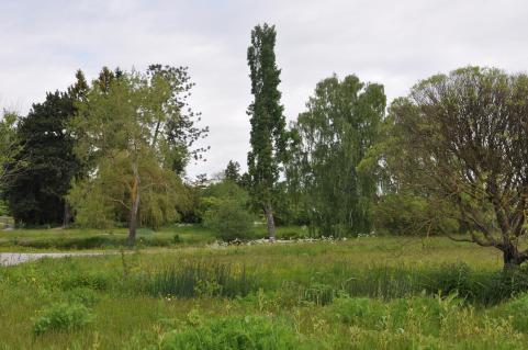 Frid råder i Bergianska trädgården.