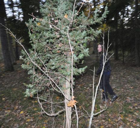 Vad är för figur som smyger runt bland träden?