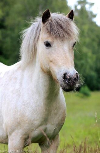 Mindy! Vår söta lilla ponny