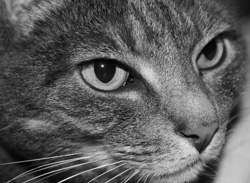 Likt katten spänner Linneablicken och hittar både sådant som ska risasoch rosas här i världen.